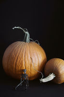 Small skeleton with pumpkins on black