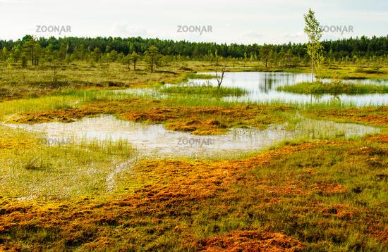 tundra sooma nationalpark estland