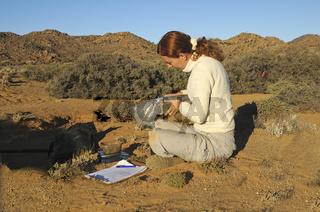 Zoologin bei Feldarbeiten, Goegap Naturreservat