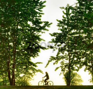 Biker silhouette at sunset