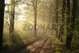 Spring forest during sunrise