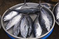 Marktszene mit Fischverkäuferinnen, Phu Quoc, Vietnam, Asia