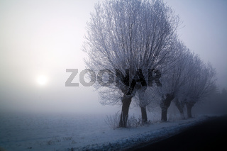 Winter landscape at sunny frozen morning