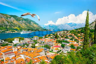 Seagull and bay of Kotor