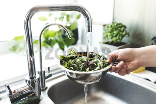 Woman washing green salad leaves for salad in kitchen in sink