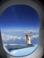 flugzeug aussicht lama