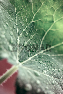 Cose up view of green leaf ith waterdrops .