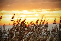 Beach Grass At Sunrise Or Sunset, Beautiful Romantic Nature Background