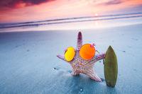 Starfish surfer on sea beach