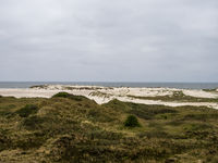 Sand dune landscape called The Planks Way on the island of Amrum, Germany.