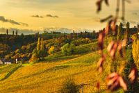 South styria vineyards, Tuscany of Austria. Sunrise in autumn.