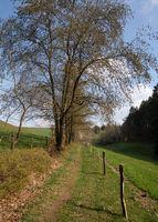 Bergischer Panoramasteig, Bergisches Land, Germany
