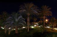 Nächtlicher Palmenweg