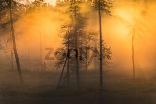 abendliche Nebelstimmung im Stubba Naturreservat, Welterbe Laponia, Lappland