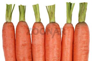 Frische Karotten, isoliert auf weiss