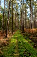 Ribnitzer Großes Moor in Mecklenburg-Vorpommern