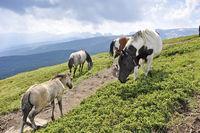 Horses in Rila