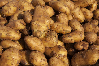 New potatoes at a market stall
