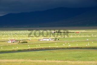 Feld in Island, Sonne Gewitter