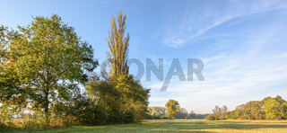 Trees in a meadow in autumn. Banner, panoramic.