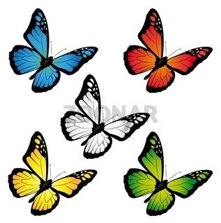 Schmetterlinge in verschiedenen Farben