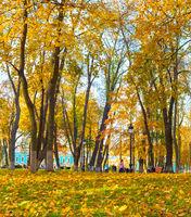 People leaves autumn park fall