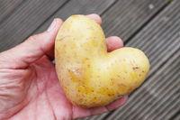 Kartoffel in Herzform liegt auf einer Männerhand