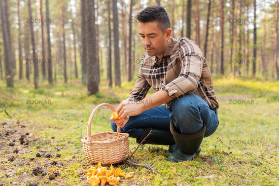 happy man with basket picking mushrooms in forest