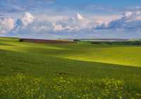 Spring evening view with rapeseed yellow blooming fields in sunlight with cloud shadows. Natural seasonal, good weather, climate, eco, farming, countryside beauty concept.
