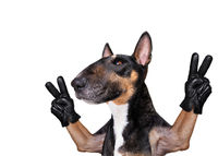 dog victory and peace fingers