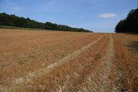 20211002_Feld gespritzt mit Glyphosat, field sprayed with Glyphosat002.jpg