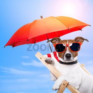 dog sunbathing on a deck chair