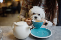 Beautiful woman is holding her cute dog, drinking coffee in cafe