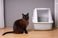 siamese cat sitting next to closed kitty litter box at home