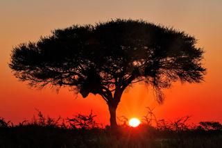 Sonnenaufgang, Etosha-Nationalpark, Namibia, | Sunrise, Etosha National Park, Namibia