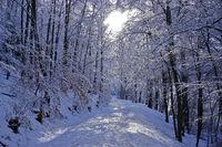 Waldweg im Winterwald