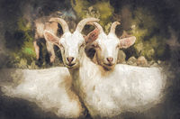 Goat on a farm in summer. Painting effect.