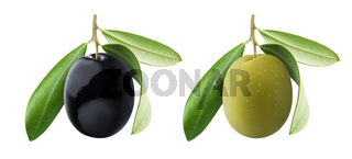 One black and green olives with leaves isolated on white background