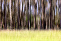 Unscharfe Bäume