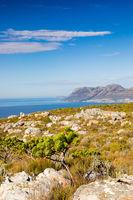 Coastal mountain landscape with fynbos flora in Cape Town