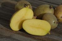 Solanum tuberosum, Kartoffel, potato, Keimlinge, buds