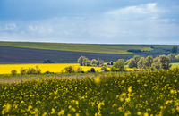 Spring countryside view with rapeseed yellow blooming fields, groves, hills. Ukraine, Lviv Region.