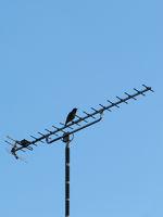 vogel auf antenne