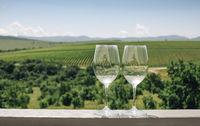 Grape vine, two glasses with white wine