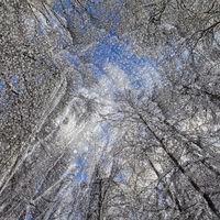 Wintereis_02.tif