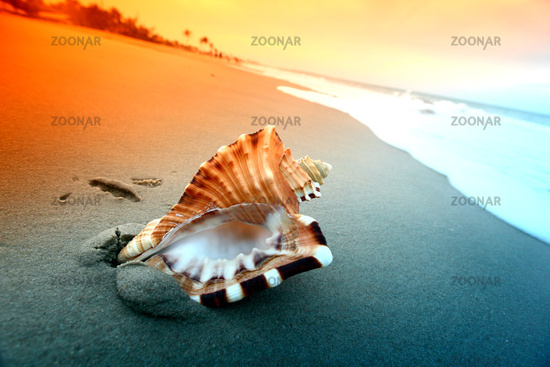 shell on sand under sunset sky