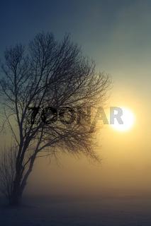 Nebliger Winter