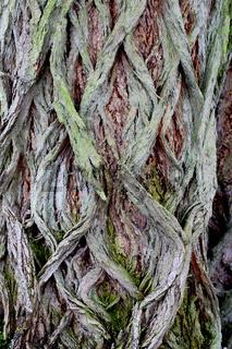 Strukturen Baumrinde