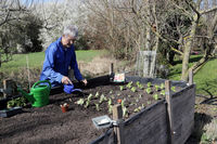Hobbygärtner junge Salatpflanzen im Hochbeet mit einer Kindergiesskanne