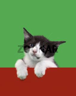Black and White Domestic Cat Cutout